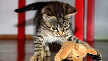 7 Amazing Life Hacks for Cat Owners